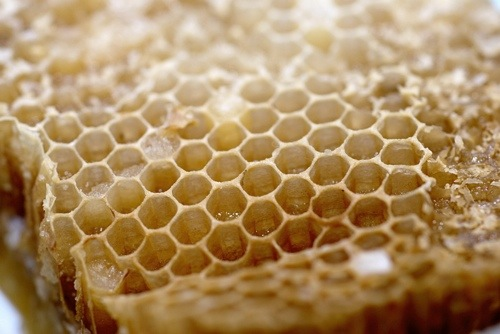 The Benefits of Propolis (Why I eat bee glue!)