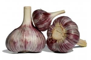 garlic-1433526-m