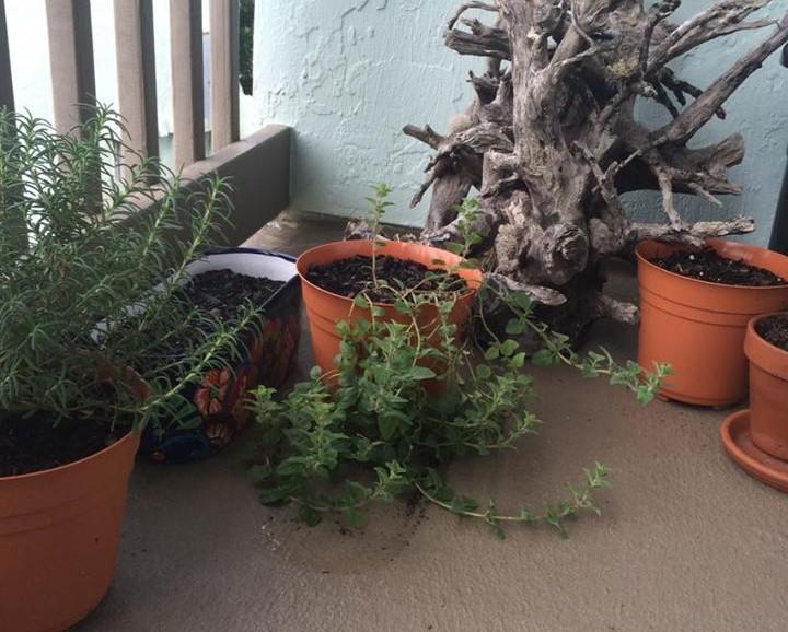 starting the apartment herb garden