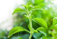 Is Stevia Safe or Addictive?