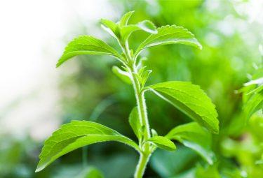 Is stevia safe? Or is stevia addictive?