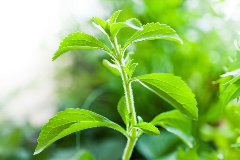 Is stevia safe? Or is stevia addictive?