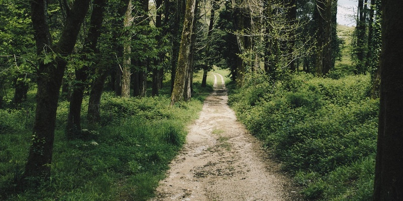 The Healing Journey | Empowered Sustenance